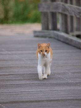 20111103_猫01.jpg