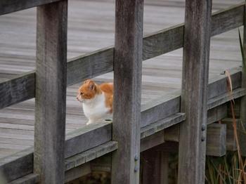 20111103_猫02.jpg