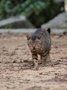 20111103_猫1.jpg