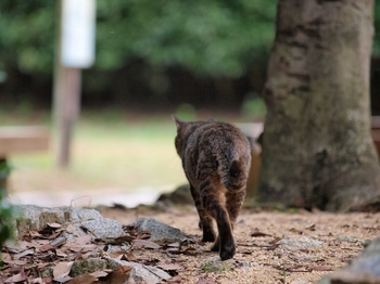 20111103_猫2.jpg