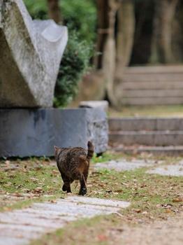 20111103_猫3.jpg