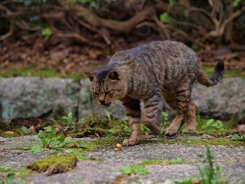 20111103_猫4.jpg