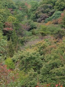 20111103_甲山森林公園1.jpg
